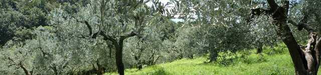 La campagne de Toscane-640x150
