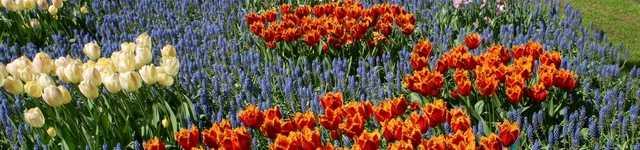 Pays-Bas-Keukenhof-640x150